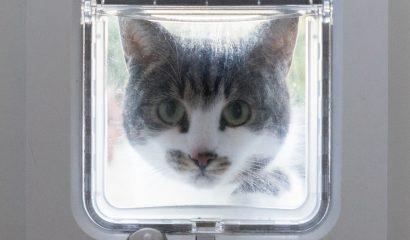 Zelfs in het kattenluikje zitten batterijen!